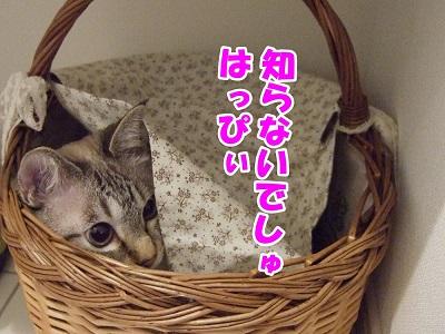 DSC5462.jpg