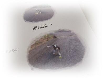 DSC6098.jpg