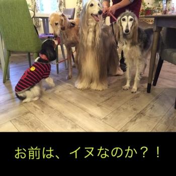 IMG_n997.jpg