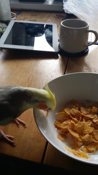 Teto eating cornflakes