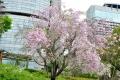 ⑥しだれ桜とOAPと帝国ホテル