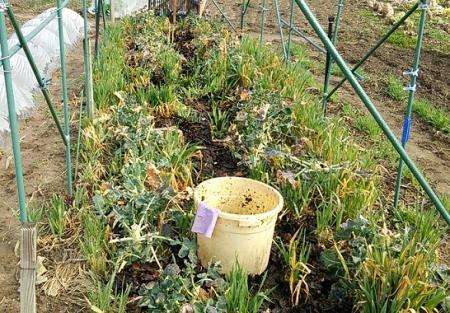 落ち葉堆肥 施用