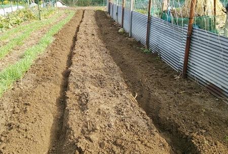 ジャガイモの植溝