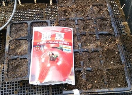 トマト種蒔き