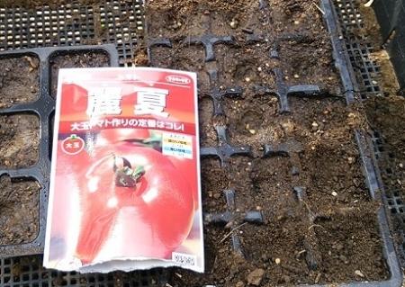 トマト蒔き直し 3月22日