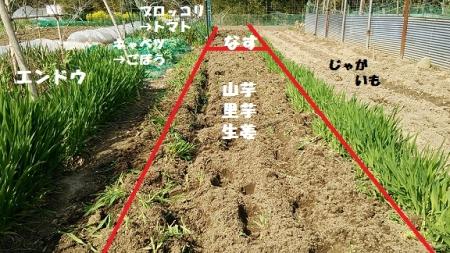 芋類栽培予定地 区画9