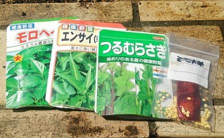 夏の葉物野菜種蒔き