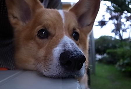 今日の番犬8