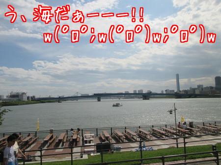 豊洲公園からの眺め。