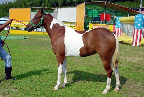 horse_42.jpg