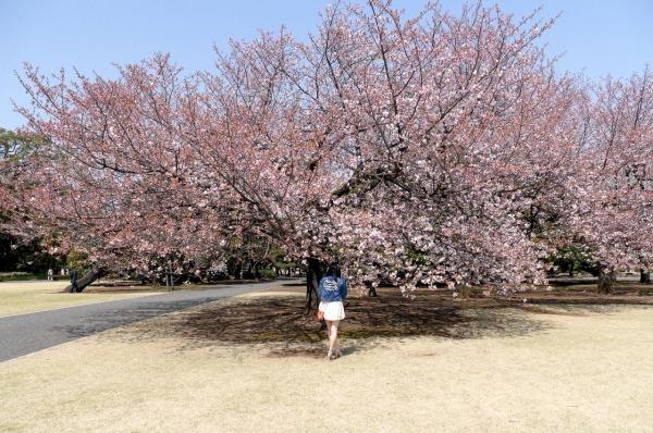 桜咲ひな画像 8