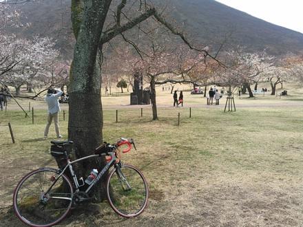 20150328_sakuranosato.jpg