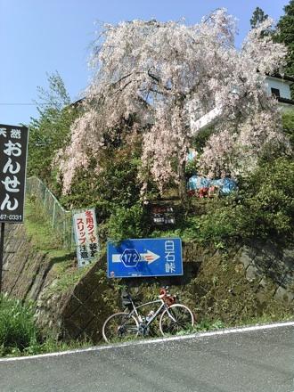 20150418_siraisi2.jpg