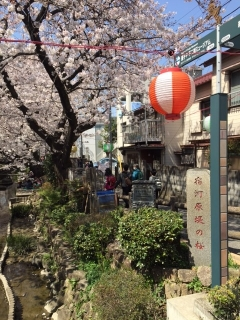 宿河原の桜_02