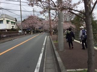 伊豆高原の桜_003