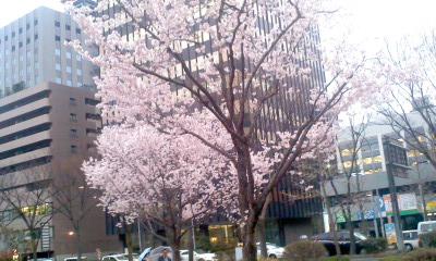 nishikichyou20140403PA0_0001
