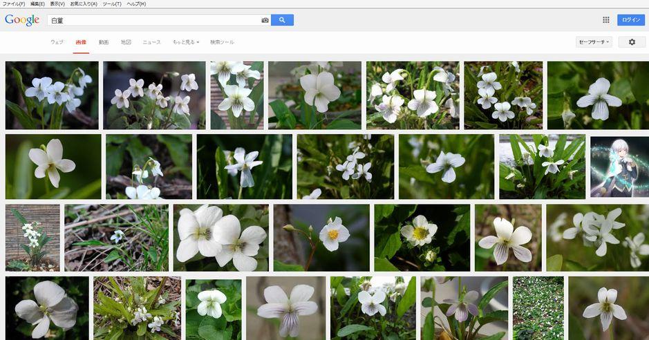 白菫きれいなほう