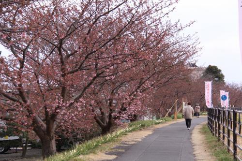 IMG_5082_convert_20150221173109山の手桜