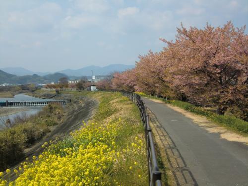 CIMG2830_convert_20150315145923山の手桜