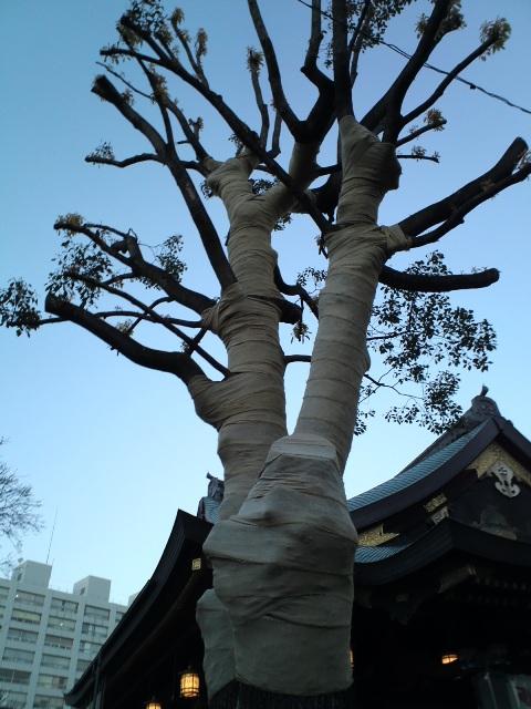 0501shino06w.jpg
