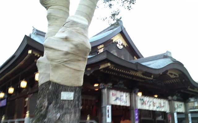 0501shino10w.jpg