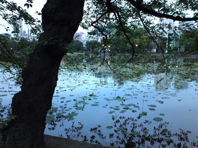 ShinobazuHasu_15050x.jpg