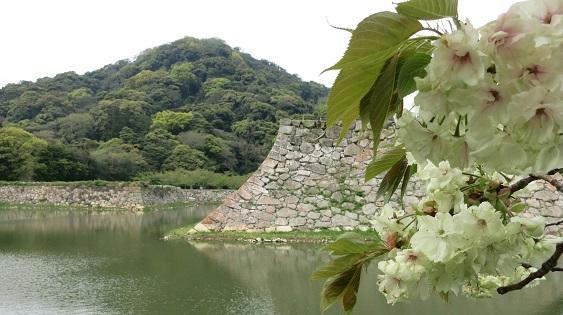 指月山とお堀と桜