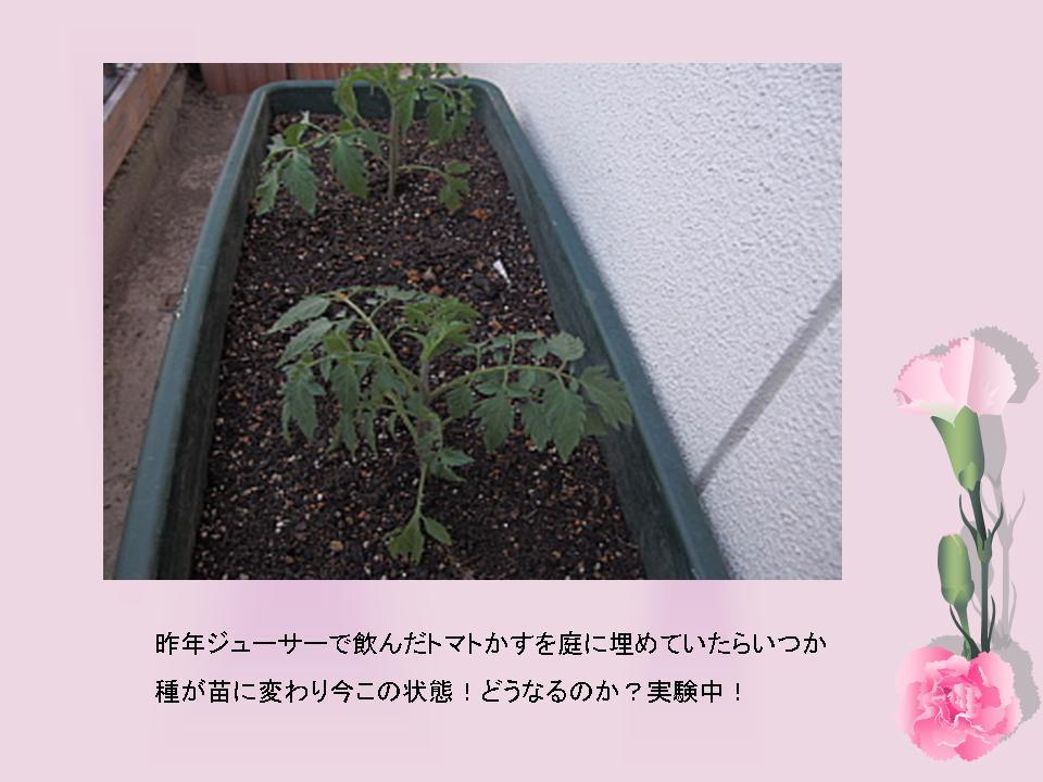 プレゼンテーション4