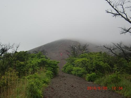 004 樹林帯