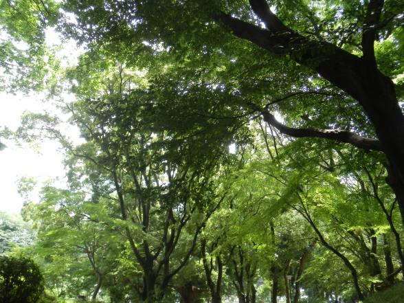 20150629 東京タワー公園1