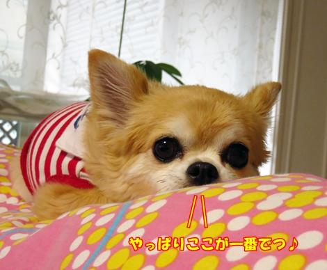 sx700IMG_5149.jpg