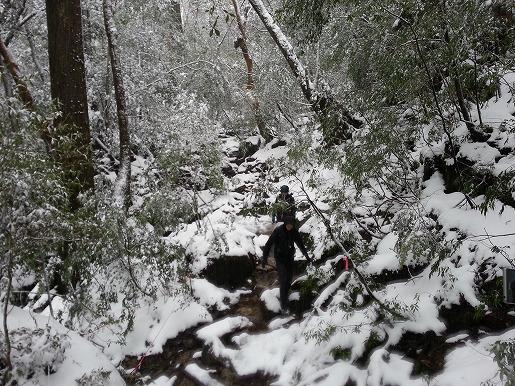 縄文杉コース登山道の様子