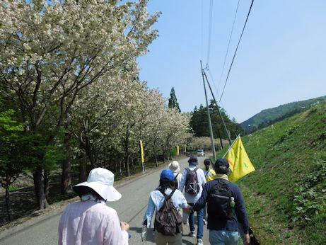 DSCN6738_kizakura.jpg