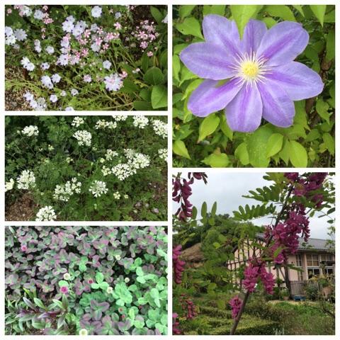英国庭園1
