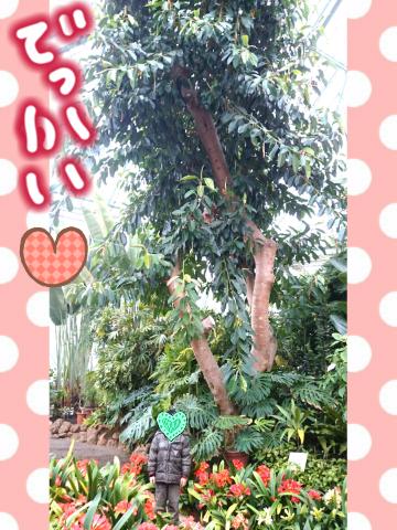 でっかい木