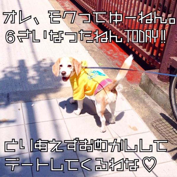 20150510レモンビーグルモク1