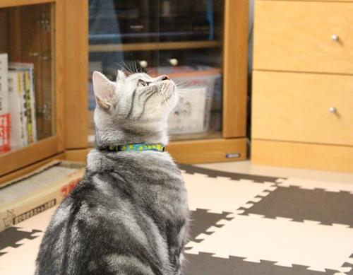 猫じゃらしのワクワク感