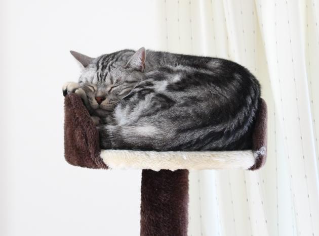 猫活、もう一日お休みします
