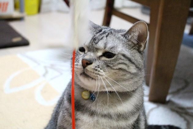 付き合いのいい猫
