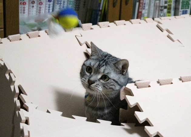 長方形ボックス