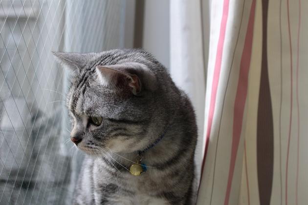 陽だまりに猫