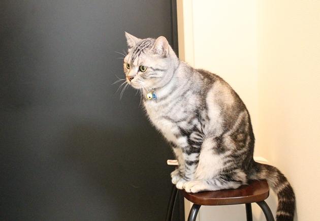 キラキラが気になる猫