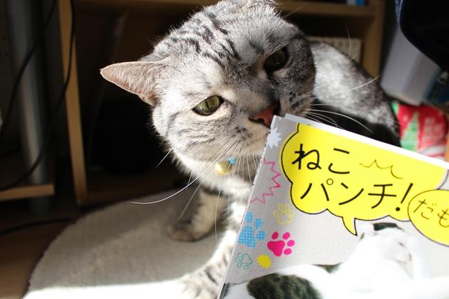 【号外】猫パンチ☆出版されました!