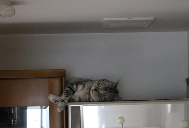 静寂のお昼寝タイム