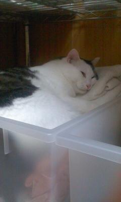 バスタオル入れに猫