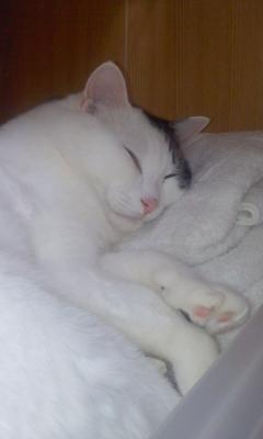バスタオル入れに猫2