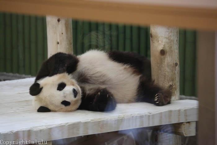 パンダのいる動物園 日本