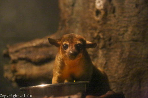 東山動植物園 夜行性動物