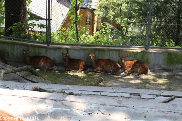 長野 動物園 シカ