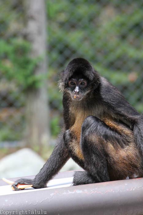 長野 動物園 茶臼山動物園